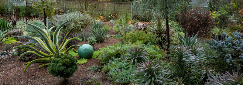succulents and conifers