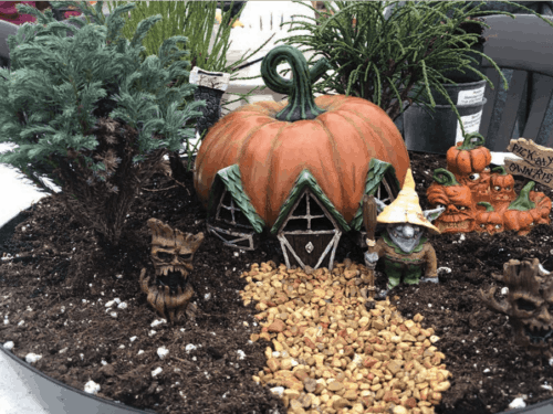 Editor's Halloween fairy garden with Platycladus orientalis 'Franky Boy' (Franky Boy Chinese arborvitae) and Chamaecyparis pisifera 'Blue Moon' (Blue Moon sawara false-cypress).