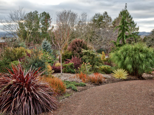 Every time I go through Sara's garden I see new vistas with mind-boggling color and texture
