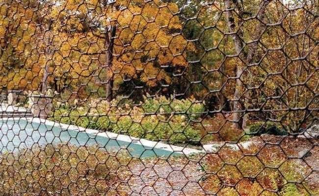 How to Prevent Arborvitae Deer Damage
