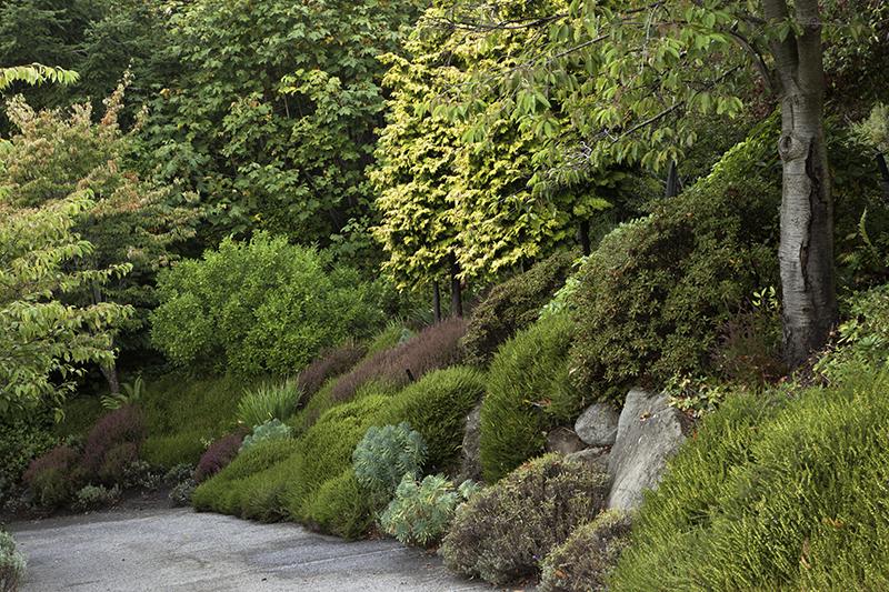 foliage gardening, winter gardens
