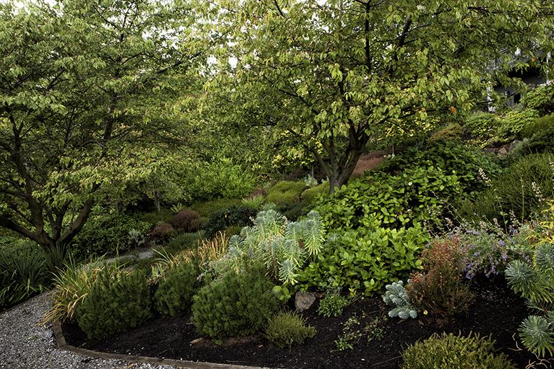 woodland gardens, foliage gardening