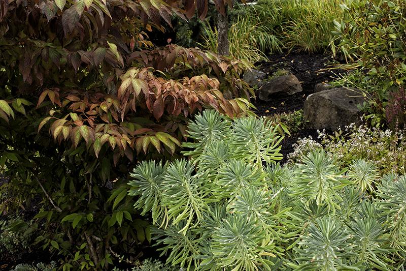 foliage plants, fall color
