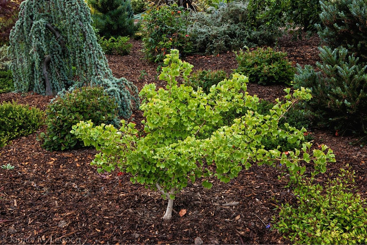 conifers, foliage plants, colored foliage