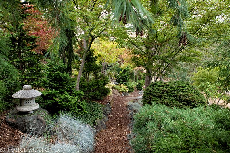foliage gardens, evergreen border, American Conifer Society