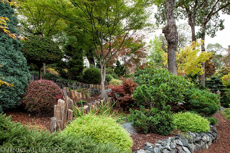 conifers, foliage plants, evergreen shrubs