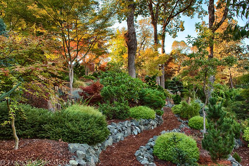 conifer garden, foliage garden, pine trees