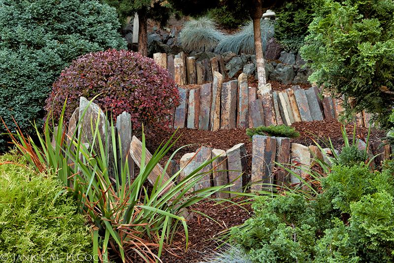 conifer garden, foliage garden, pine trees, evergreen shrubs