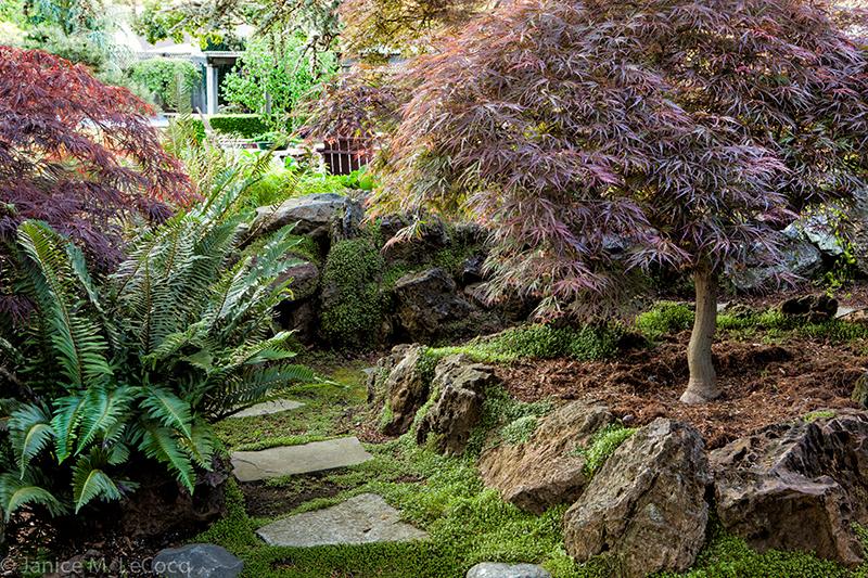 purple foliage plants