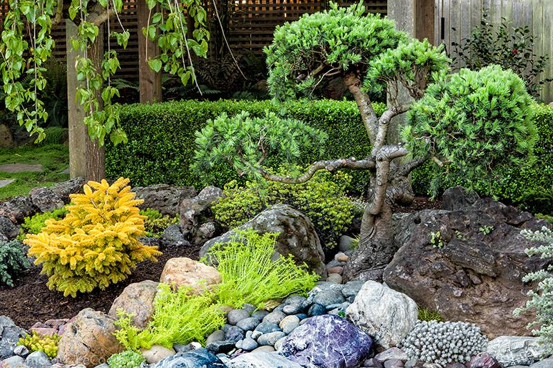 conifers, foliage plants, golden foliage