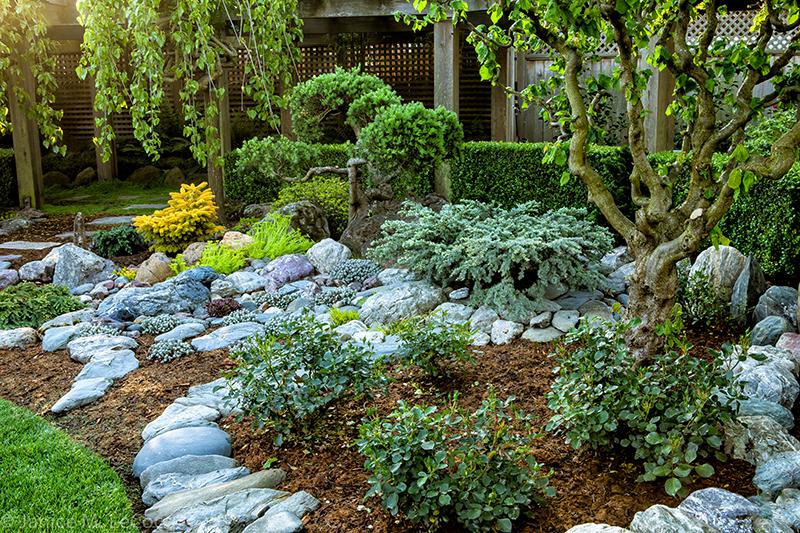 foliage garden, evergreen foliage