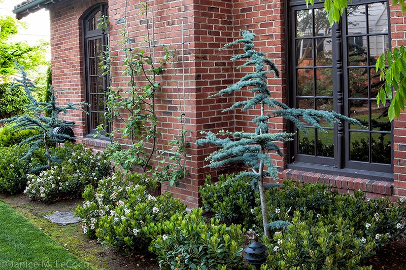 conifers, foliage plants, evergreen plants