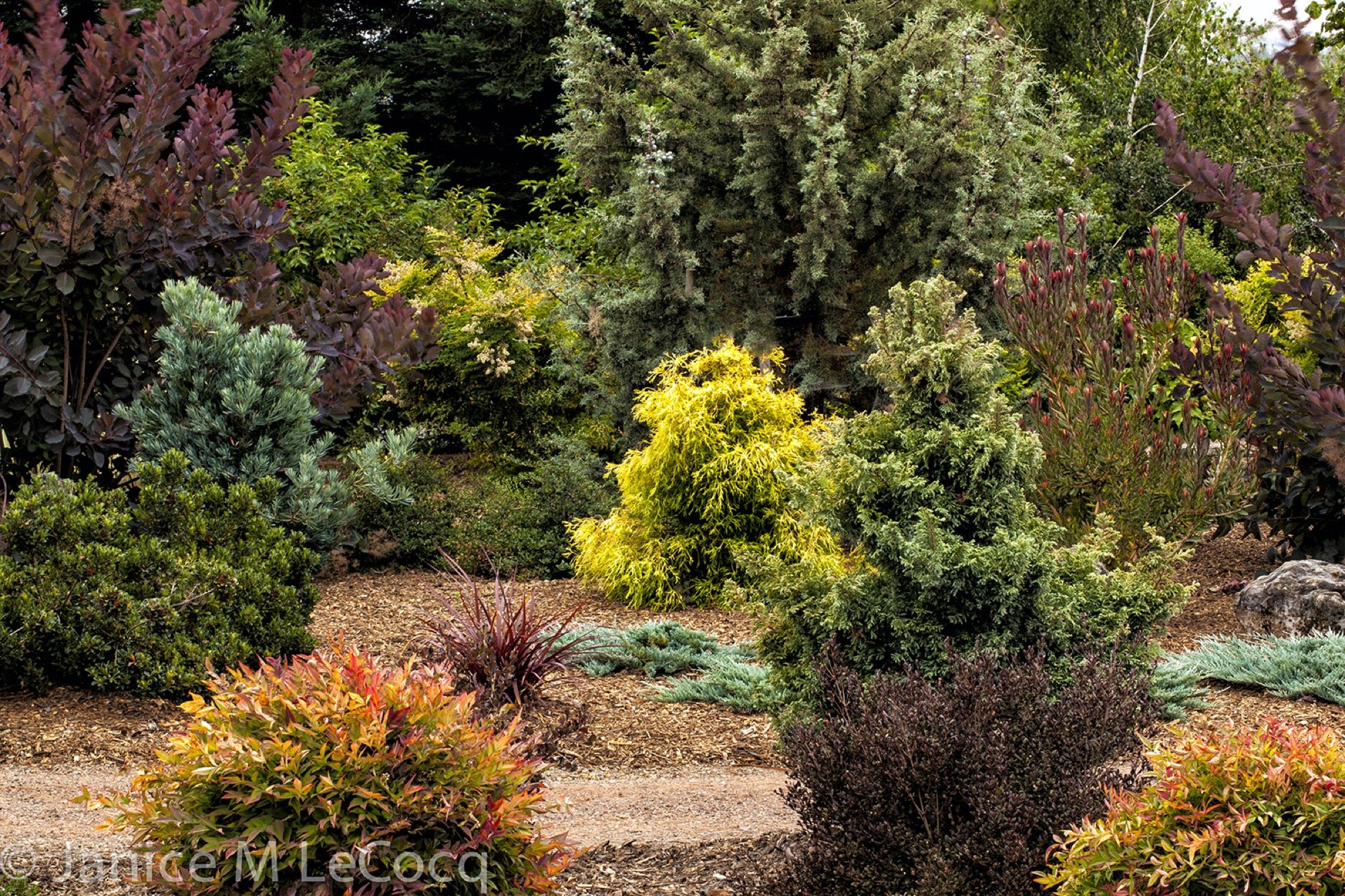 color wheel combinations, foliage plants, colorful foliage