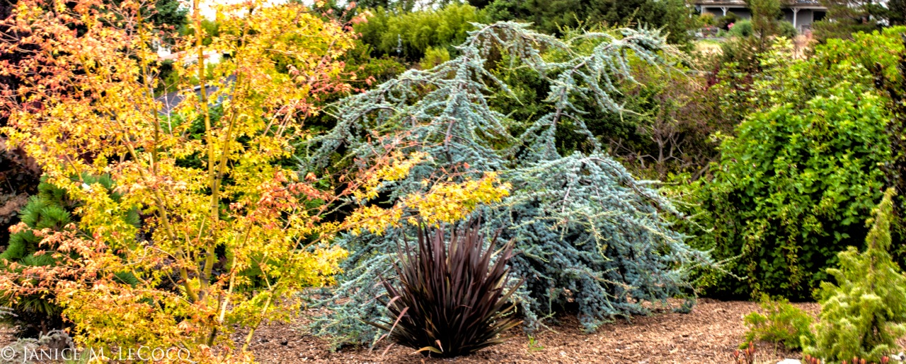 color wheel combinations, color wheel opposites, colored foliage, foliage plants