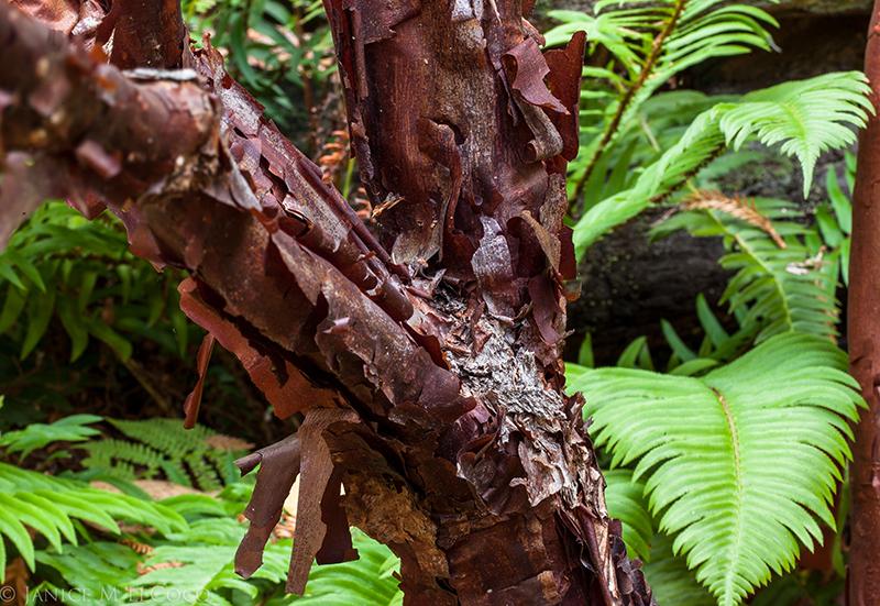 Foliage plants, interesting bark