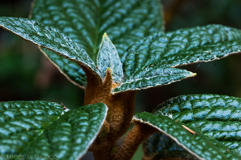 foliage plants, evergreen shrubs