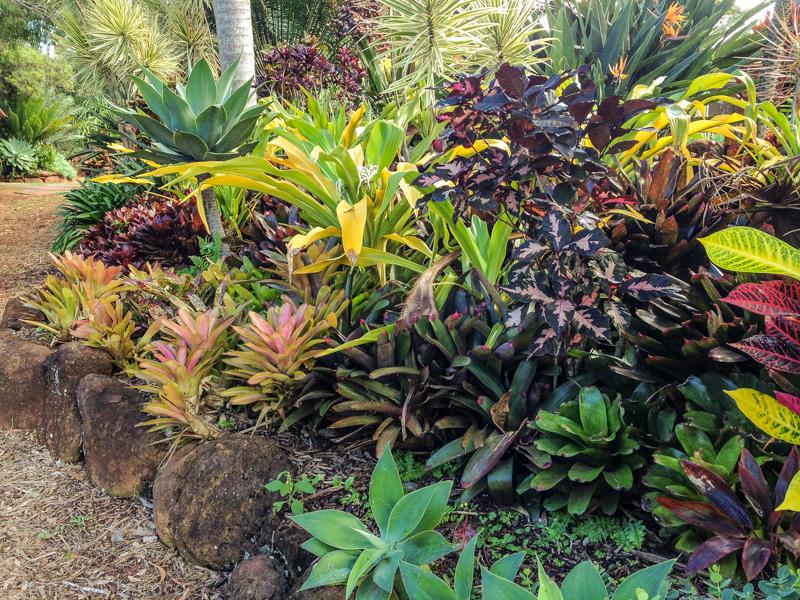Molokai plants