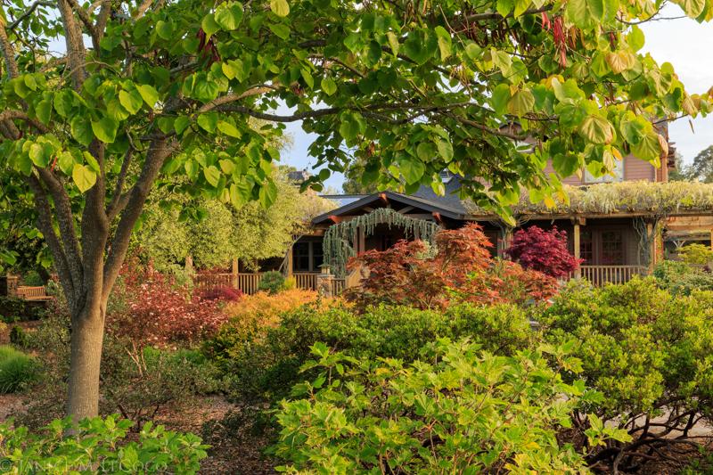 redbuds, maples, foliage gardening