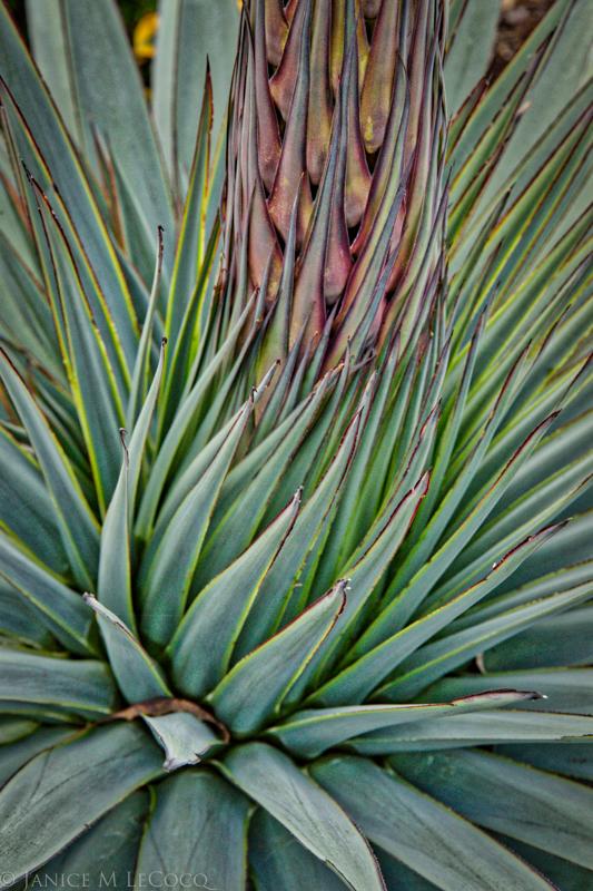 succulents, garden photography