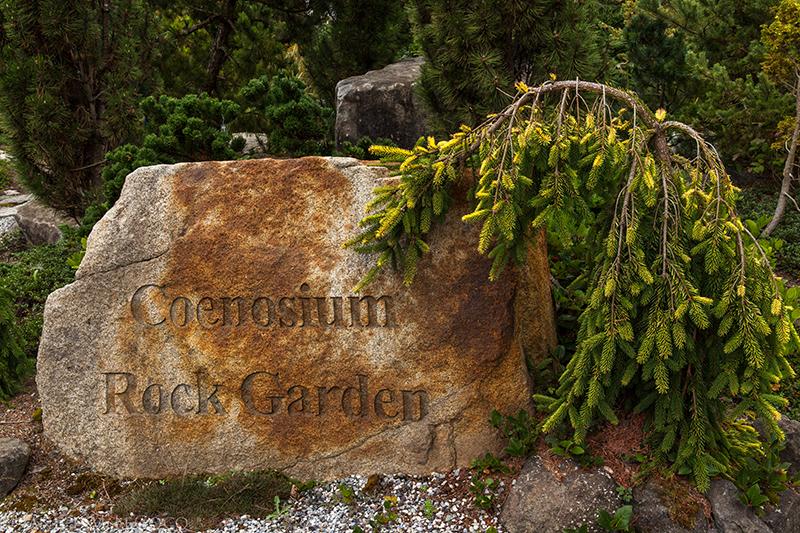conifers, evergreen plants, foliage gardening