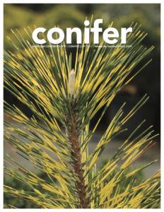 Conifer Quarterly Fall 2019