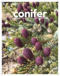 Conifer Quarterly Spring 2020