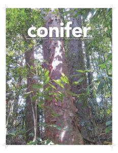 Conifer Quarterly Summer 2020