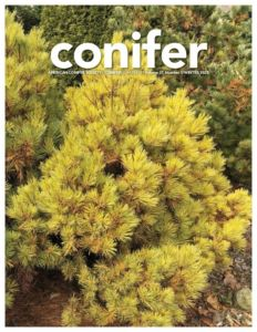 Conifer Quarterly Winter 2020
