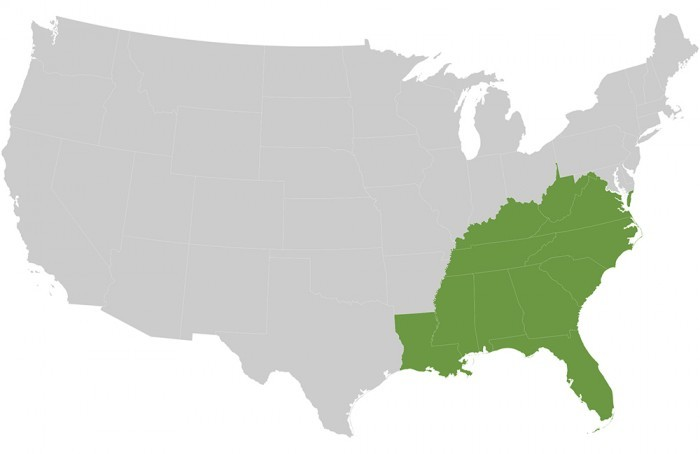 American Conifer Society Southeast