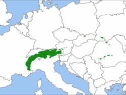 natural range of <em>Pinus cembra </em>