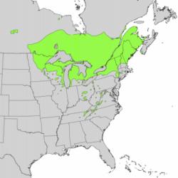 natural range of <em>Thuja occidentalis </em>