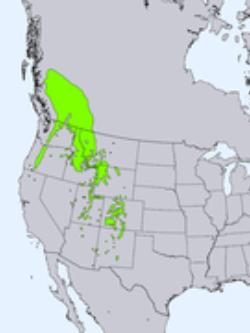 natural range of <em>Picea engelmannii </em>