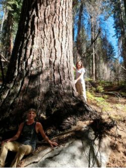 Big Tree Hunters from left, Ben Fetzer, Michael W. Taylor and Maria Mircheva, posing with the second tallest sugar pine. (Photo by Sugar Pine Foundation via Associated Press)
