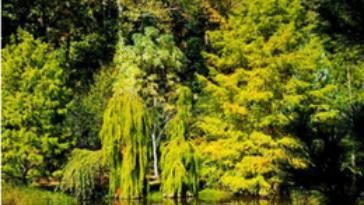 A Tour of the Cox Arboretum