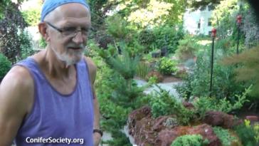 Table Garden featuring true miniature conifers