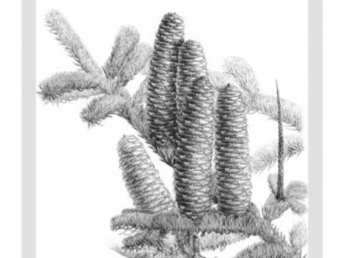 Artist: Li Aili, after a botanical sketch by Zsolt Debreczy
