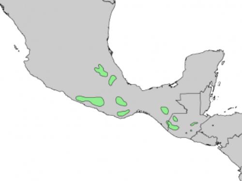 natural range of <em>Abies religiosa </em>