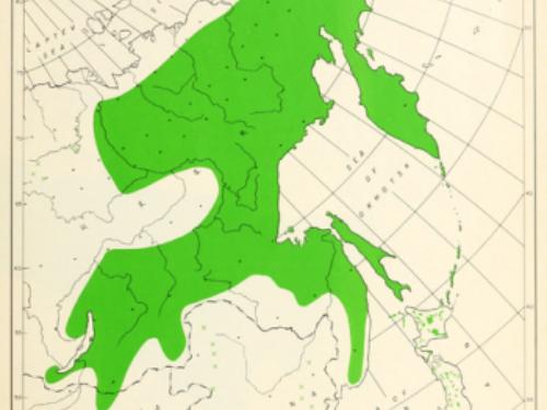 natural range of <em>Pinus pumila </em>