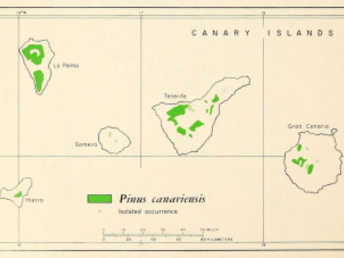 natural range of <em>Pinus canariensis </em>
