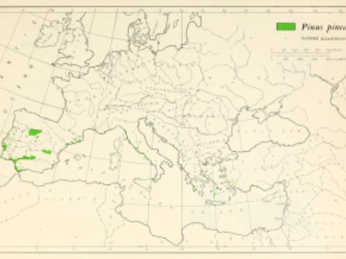 natural range of <em>Pinus pinea</em>