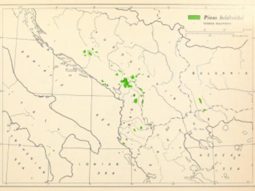 natural range of <em>Pinus heldreichii </em>