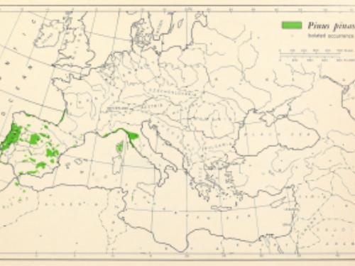 natural range of <em>Pinus pinaster </em>