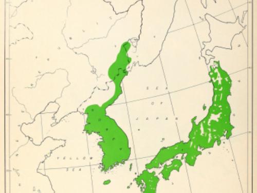 natural range of <em>Pinus densiflora </em>