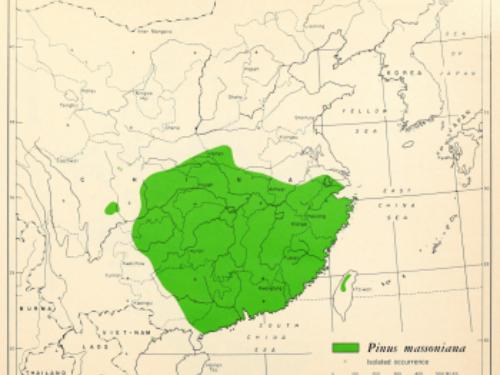 natural range of <em>Pinus massoniana</em>