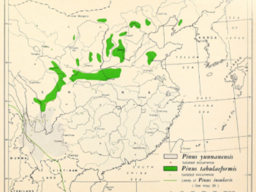 natural range of <em>Pinus yunnanensis </em>(in gray).