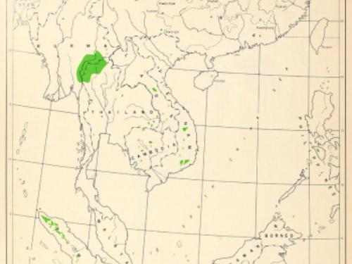 natural range of <em>Pinus merkusii </em>