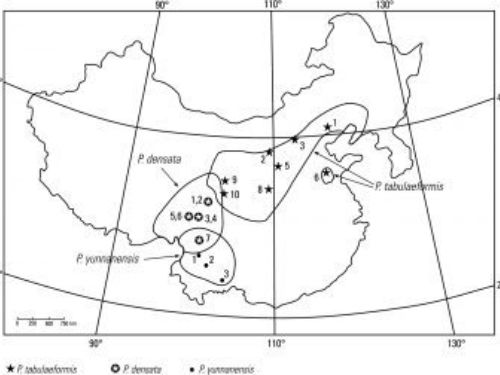 natural range of <em>Pinus densata </em>as well as associated pines.