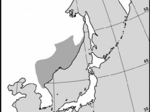 natural range of <em>Picea koraiensis </em>