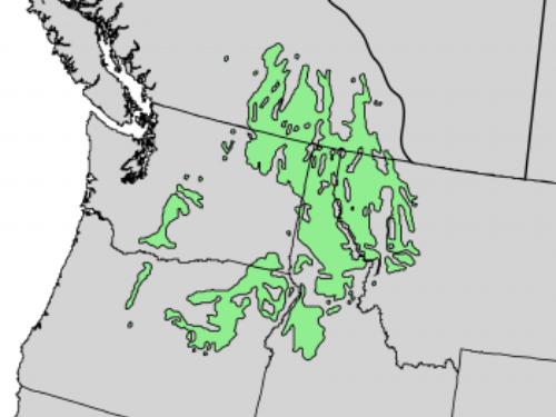 Native range of <em>Larix occidentalis </em>