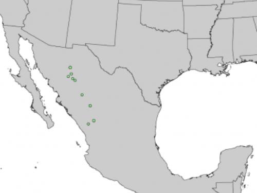 natural range of <em>Picea chihuahuana </em>